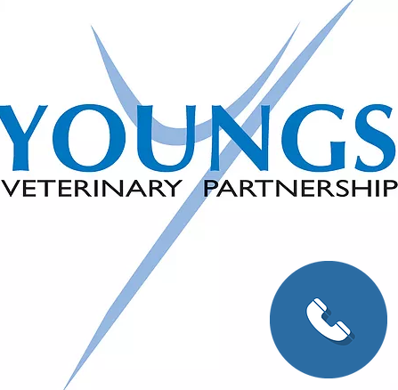 Youngs Veterinary Hospital